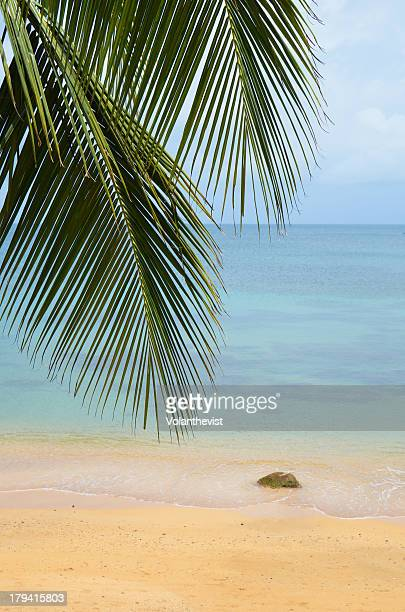 Beach paradise with palm trees in The Caribbean