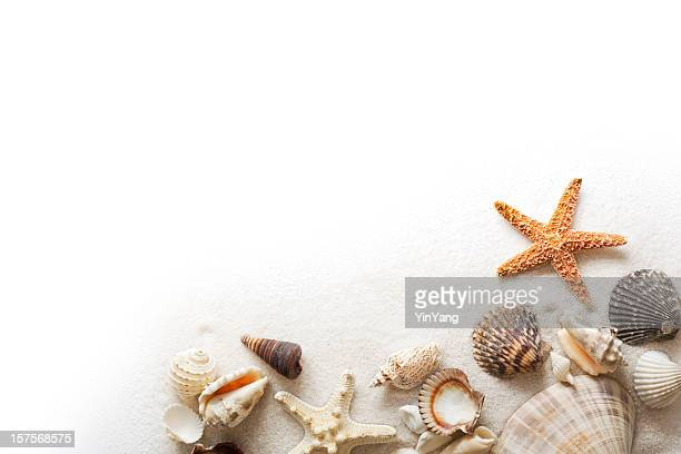beach sand, starfish, and seashells frame border on white background - sand stock pictures, royalty-free photos & images