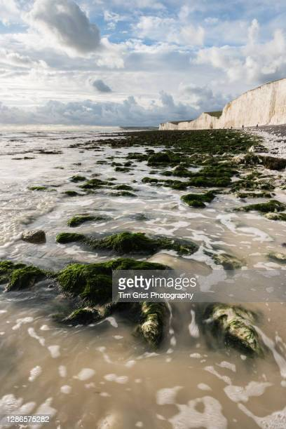 beach scene, seven sisters cliffs, east sussex, uk - seascape stock pictures, royalty-free photos & images