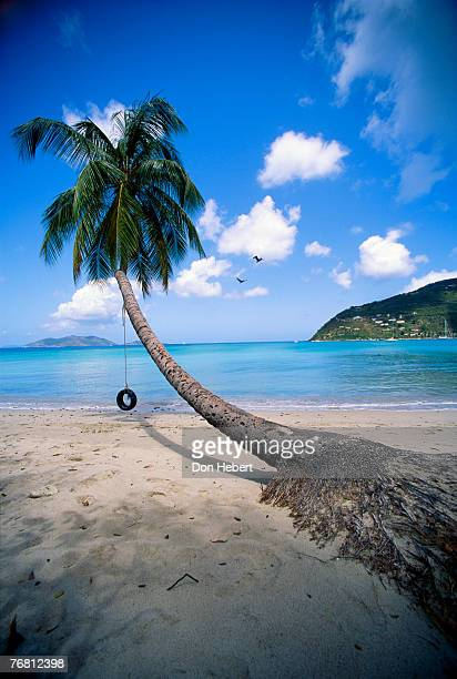 beach scenery with tire swing - cane garden bay stock pictures, royalty-free photos & images