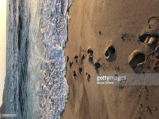 Beach Scenes