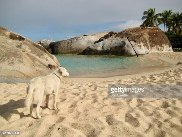beach scenes - islas de virgin gorda fotografías e imágenes de stock