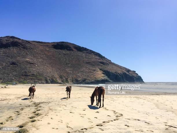 beach scenes - todos santos mexico fotografías e imágenes de stock