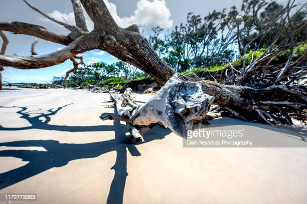 beach scenics driftwood ocean - jacksonville beach stock pictures, royalty-free photos & images