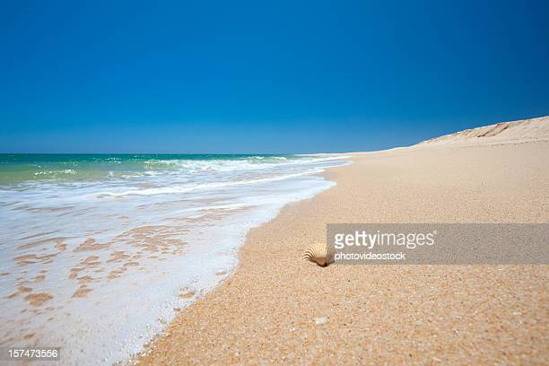 Beach sea and shell