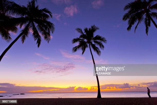 beach sunset - miami florida stock pictures, royalty-free photos & images