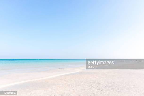 a beach, the turquoise colored sea a a clear blue sky. - isla holbox fotografías e imágenes de stock