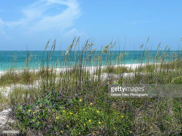 beach time - st. petersburg florida stock photos and pictures