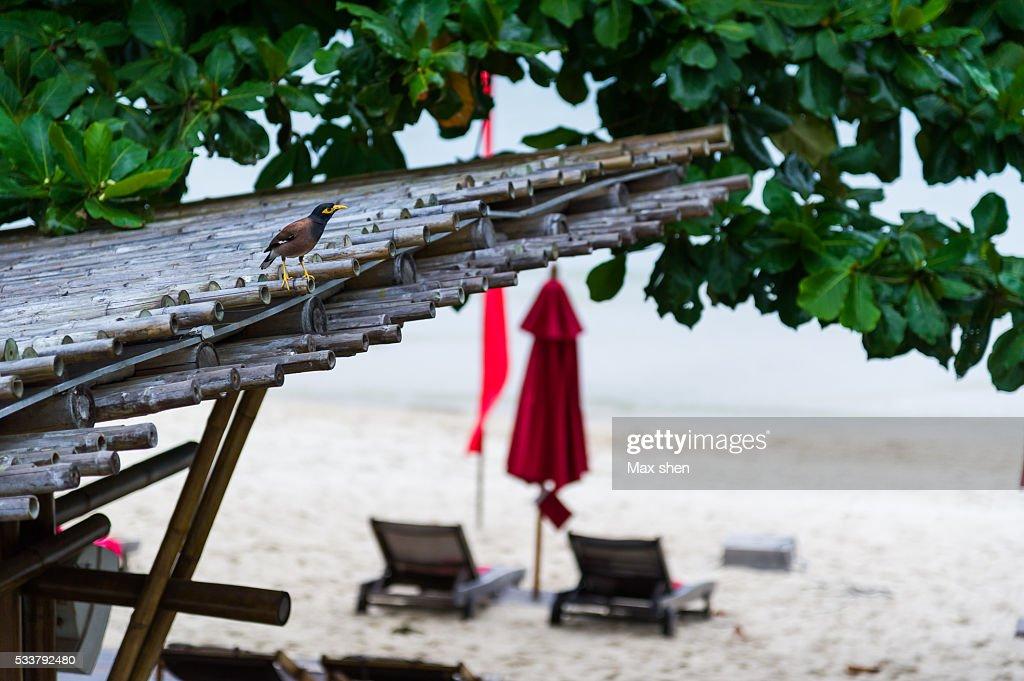 Beach view at the Koh Phangan : Foto stock