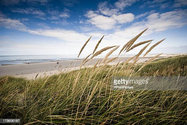 Beach view frome a dune