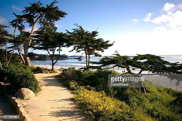 beach view walkway, footpath & cypress tree, carmel california scenic coastline - monterrey stock pictures, royalty-free photos & images