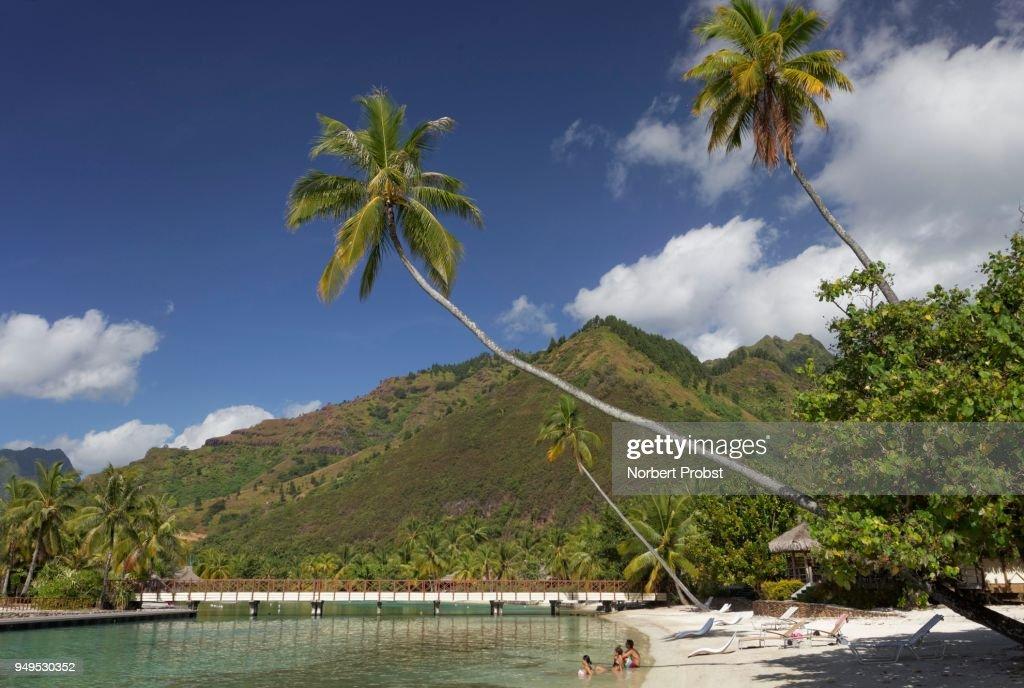 Beach With Overhanging Palm Trees Bridge Green Hills Luxury