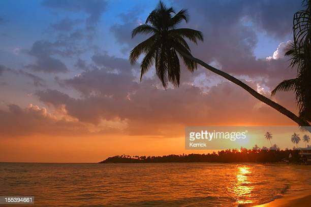 beach with palm in sunset - Unawatuna / Sri Lanka
