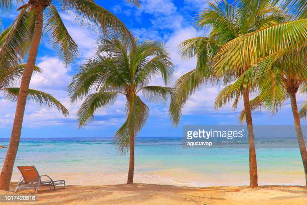 beach with palm trees and beach chair - montego bay - jamaica, caribbean - montego bay stock pictures, royalty-free photos & images