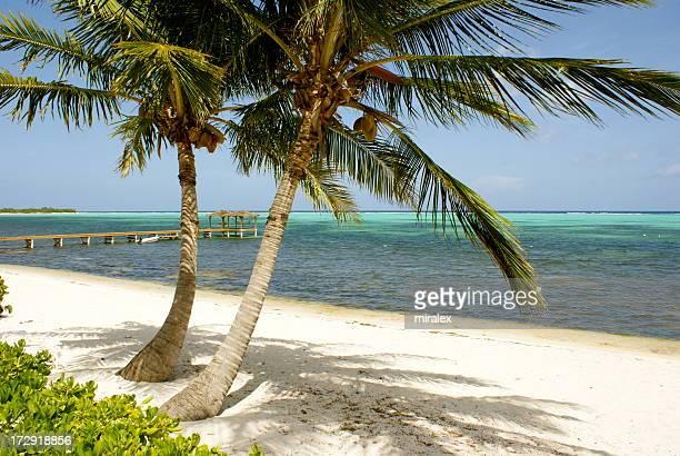 Strand mit Palmen auf Little Cayman