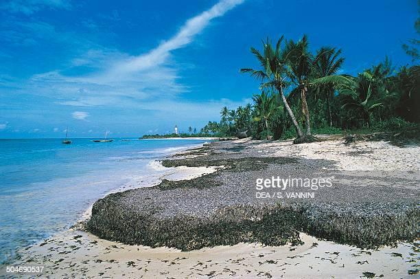 Beach with palm trees Ras Nungwi Zanzibar Tanzania