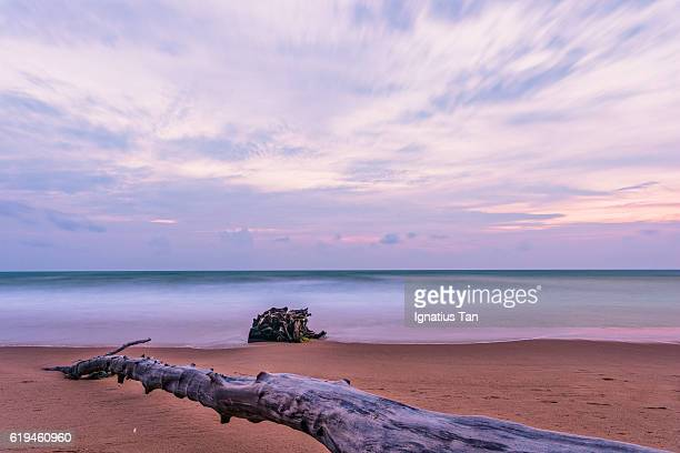 beach with tree trunk at dusk - ignatius tan stock photos and pictures