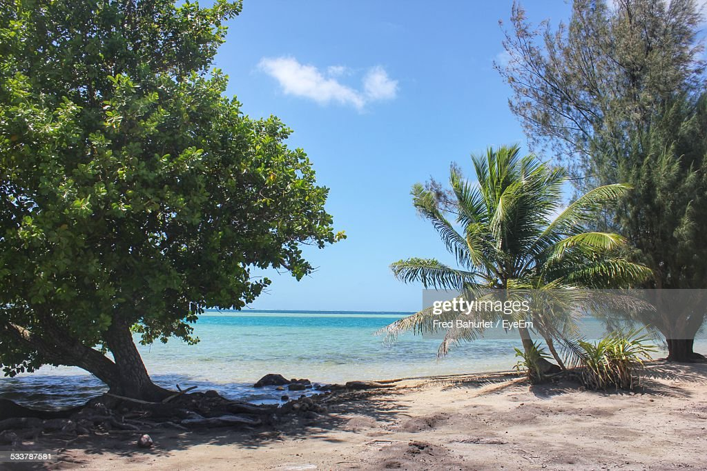 Beach With Trees : Foto stock