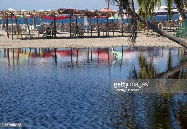 beach with umbrellas, tables and chairs under ramadas, all reflected in a tide pool along with a snowy egret; tenacatita bay, costalegre, jalisco, mexico - timothy hearsum ストックフォトと画像