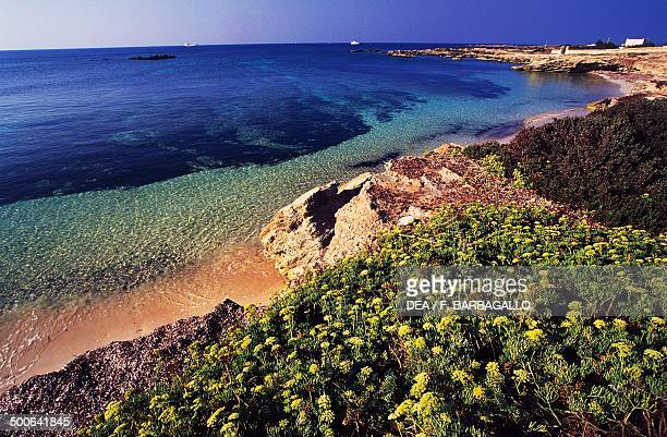 Beach with vegetation on the southern side of Favignana Island Egadi Islands Sicily Italy