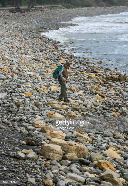 A beachcomber walks along a formerly sandy beach but now rocky shoreline at Refugio State Park on February 20 in Refugio Beach California Following a...