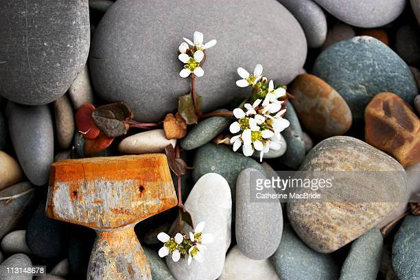 beachcombing - catherine macbride stock pictures, royalty-free photos & images
