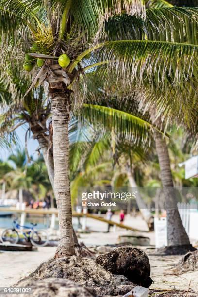 Beachfront scene near beach town with palm trees