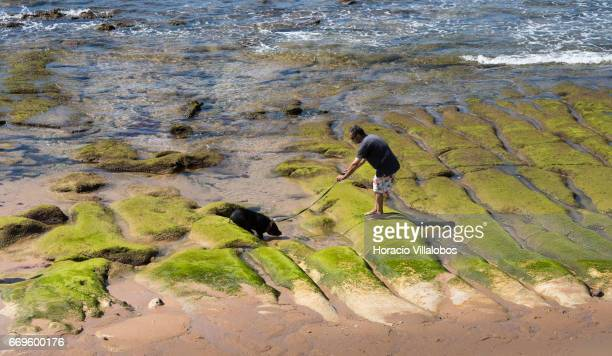 A beachgoer walks his Vietnamese potbellied pig at Praia do Tamariz on April 16 2017 in Estoril Portugal Although active all year round Portuguese...