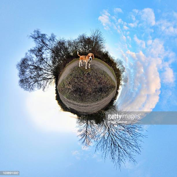 Beagle in park with little planet effect