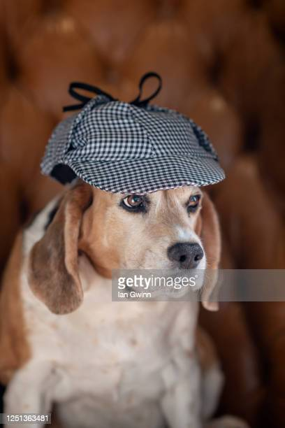 beagle in sherlock holmes' hat - ian gwinn stock pictures, royalty-free photos & images