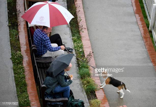 Beagle looks on as rain delays play during Day Three of the Specsavers County Championship Division One match between Somerset and Essex at The...