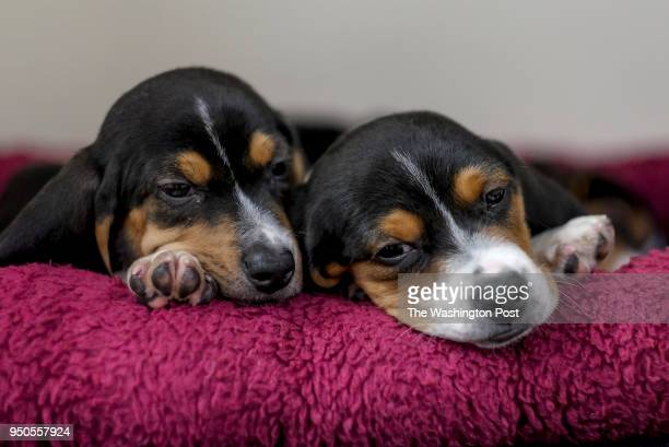 47 Puppi Pictures, Photos & Images - Getty Images