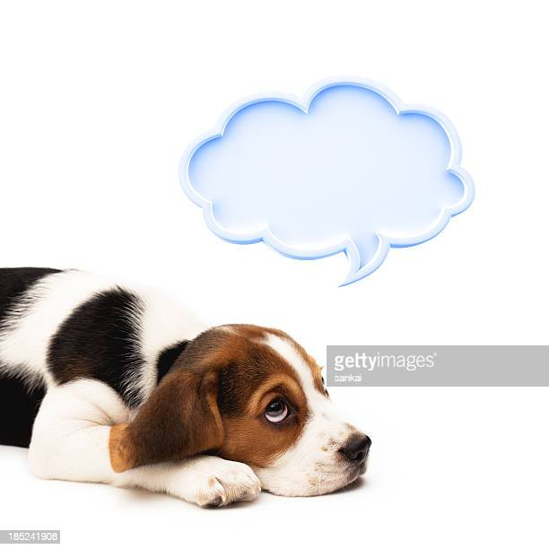 Beagle puppy with speech bubble isolated on white background