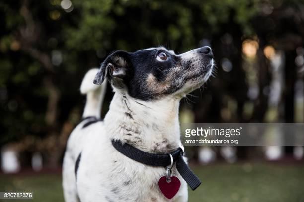 Hund im Park
