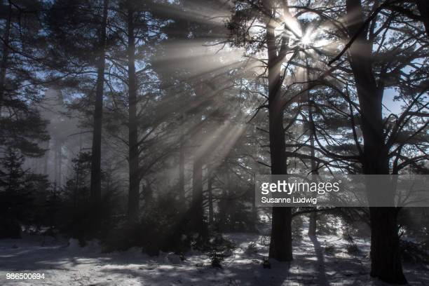 beam me up! - susanne ludwig stock pictures, royalty-free photos & images