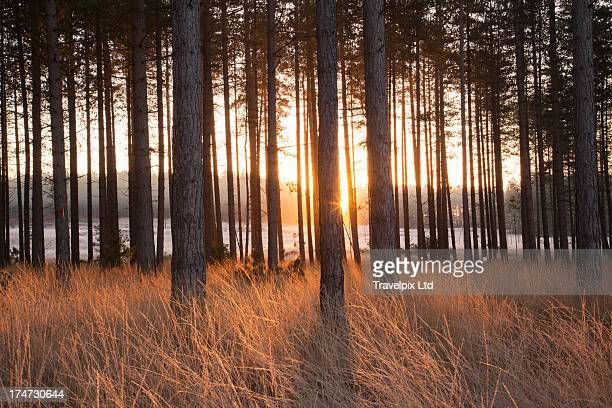 beams of sunlight, forest interior - hampshire england stock pictures, royalty-free photos & images