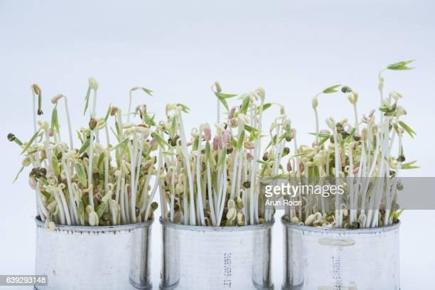 Bean sprouts in cans on white background