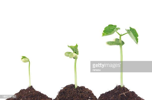bean sprouts - seedling stock pictures, royalty-free photos & images