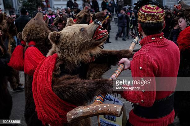 A bear costume worn performer dances during a traditional dance festival in Vatra Dornei Romania on December 29 2015