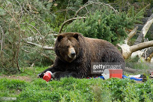 bear invading campground - bear stock pictures, royalty-free photos & images