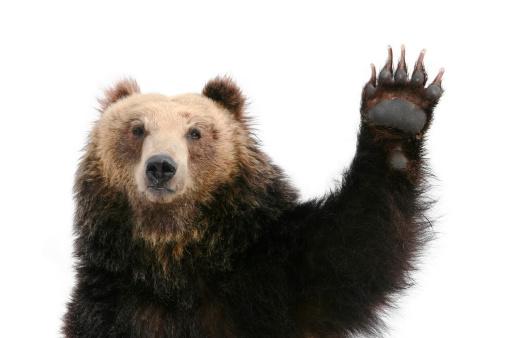 Bear Raising Paw 149070679