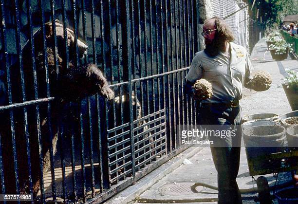 A bear rests its paws on the bars of the cage while waiting to be fed by a zookeeper at Lincoln Park Zoo Chicago Illinois 1980s