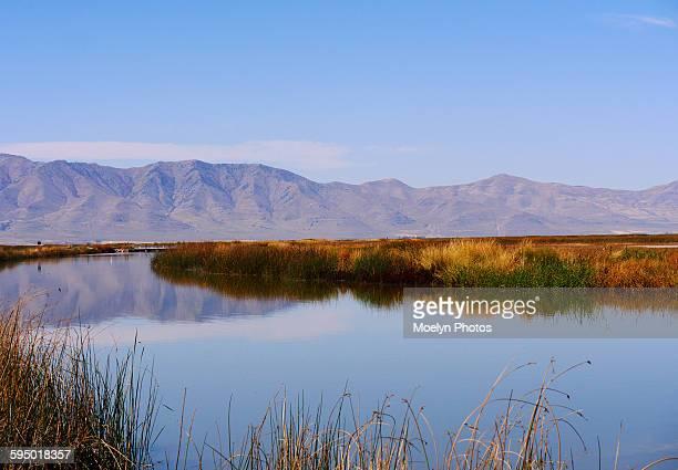 bear river migratory bird refuge - great salt lake stock pictures, royalty-free photos & images