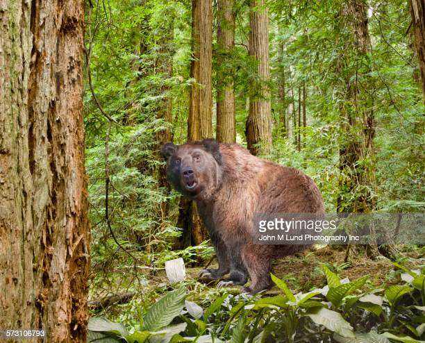 bear squatting in dense woods - funny toilet paper stock pictures, royalty-free photos & images