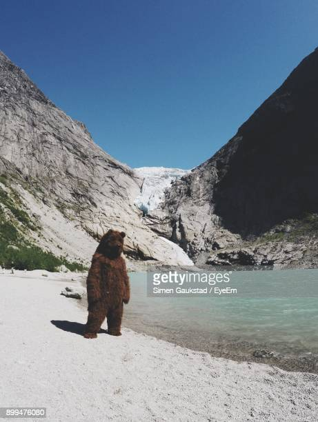 Bear Standing At Lakeshore Against Mountains During Winter