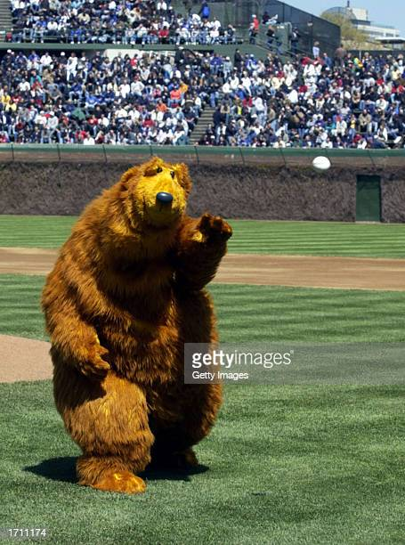 Bear the star of Jim Henson's Bear in the Big Blue House throws out the first pitch before a Chicago Cubs game against the Los Angeles Dodgers at...