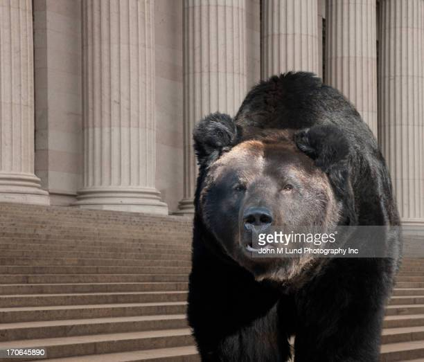 Bear walking on city street, New York, New York, United States