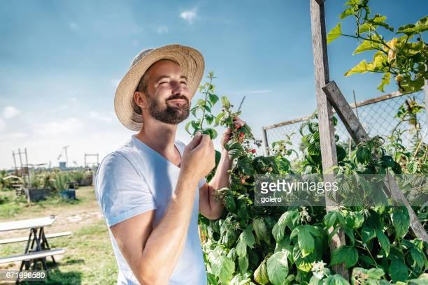 bearded handsome man eating berries in summer garden