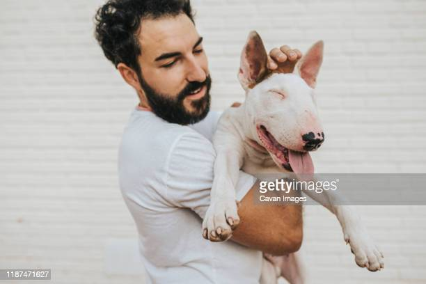 bearded man hugging white bull terrier dog - bull terrier stock pictures, royalty-free photos & images