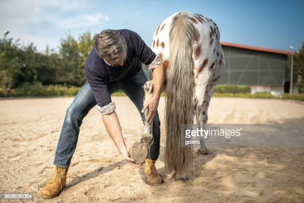 bearded veterinarian checking hoof of spotted horse - men with hairy legs stock photos and pictures
